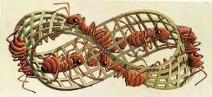 skruzdes